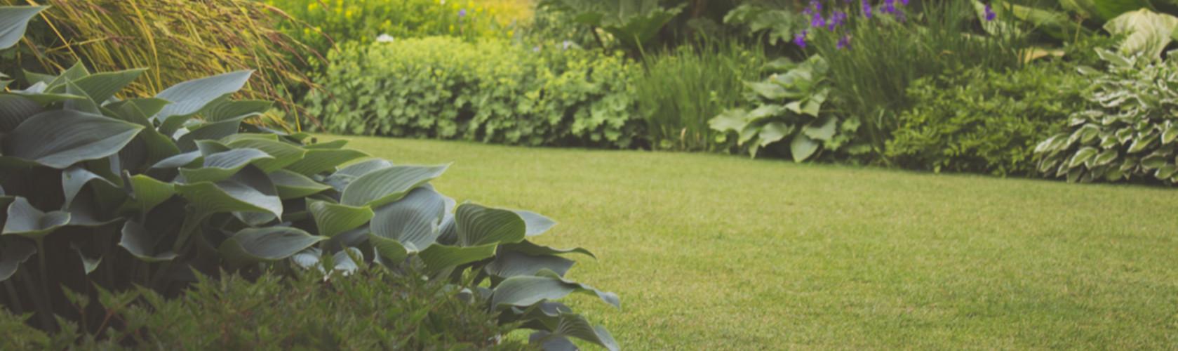 garden_background_slide